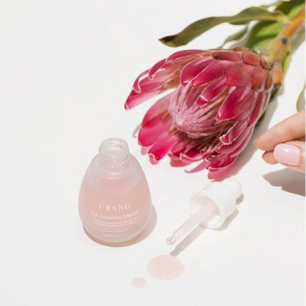 URANG Pink Everlasting Ampoule Helichrysum Italicum Flower Water