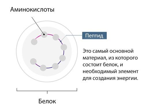 9 Пептидный комплекс