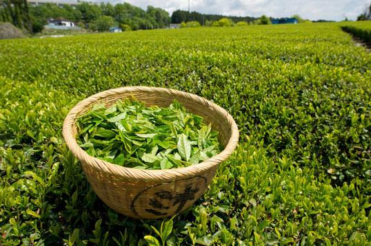 Green tea benefits for skin